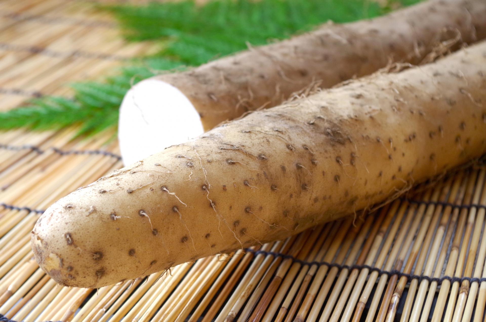 【ためしてガッテン|便秘改善】長芋を生食でおいしく食べるレシピ!レジスタントスターチで腸内環境が改善?